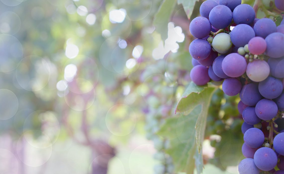 Vinos Ecológicos y Naturales